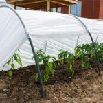Агроволокно на огородных грядках