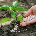 Лучшие средства для роста растений