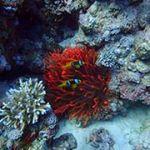 Подводный мир собственными глазами