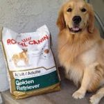 Правильно подобранное питание является основой для крепкого здоровья собаки