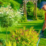 Услуги по озеленению участка