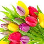 Заказ цветов с доставкой в ростове-на-дону
