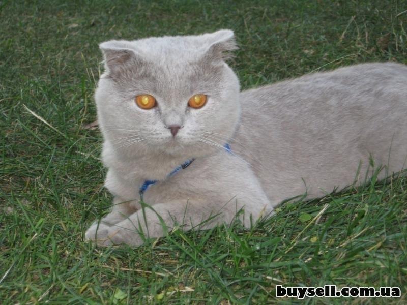 Вязка! Котик ищет кошечку! изображение 3