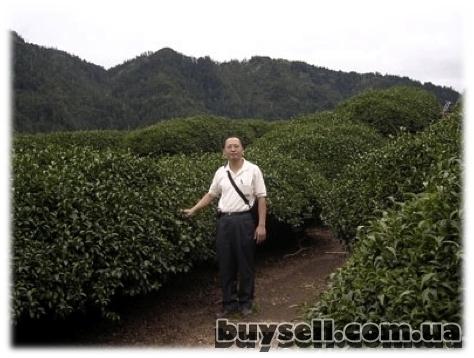 Высокогорный чёрный чай TIBETEA X.   O.    (30 шт.     по 5гр)    Tibe изображение 3