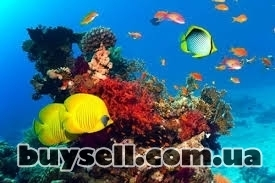 """аквариумный салон """"нептун"""" изображение 3"""