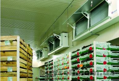 Холодидьные камеры для хранения яблок изображение 3