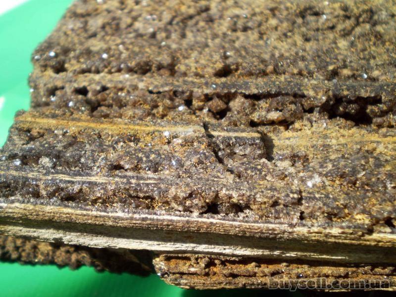 окаменелая араукария изображение 3