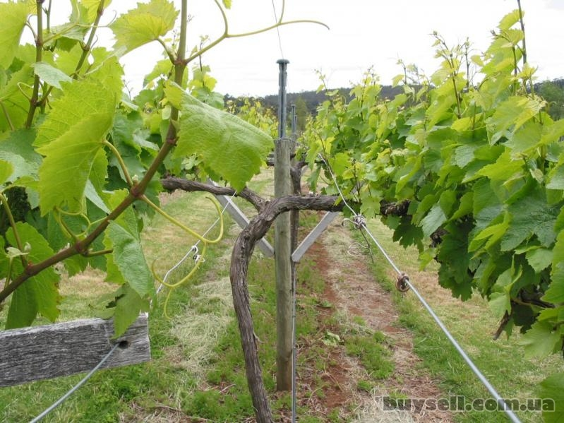 Проволока для подвязки виноградников 2,    0-4,    0-6,    0мм для под