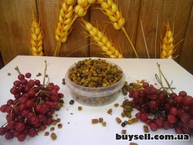 Перга (пчелиный хлеб) изображение 4
