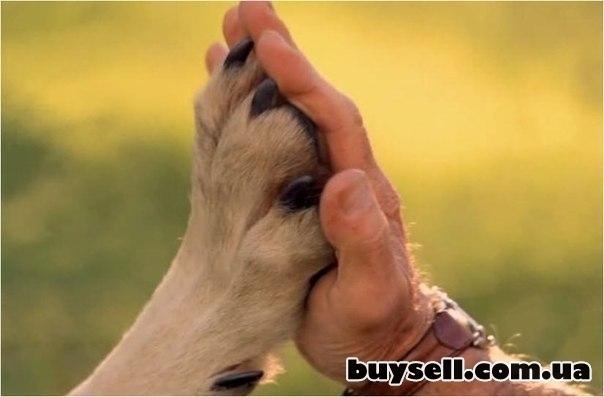 Скорая ветеринарная помощь.  Вызов ветеринара на дом изображение 2