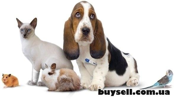 Скорая ветеринарная помощь.  Вызов ветеринара на дом изображение 3