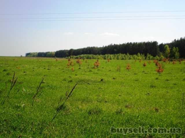 Продам участок 2 га в Березовке 17 км от Киева по Житомирской трассе изображение 3