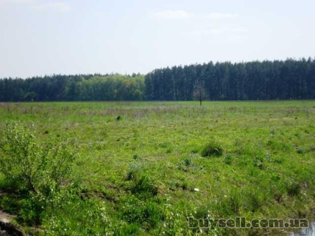 Продам участок 2 га в Березовке 17 км от Киева по Житомирской трассе изображение 5