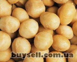 Продам орех макадамия