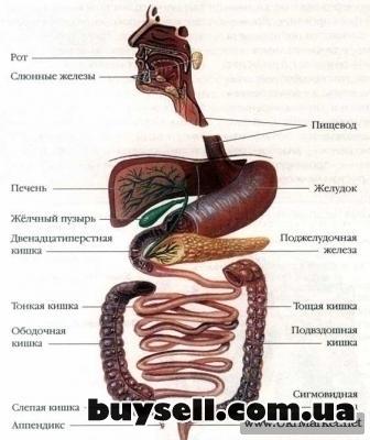Сеансы оздоровительной чистки толстого кишечника – Гидроколонотерапия изображение 3