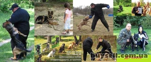 Дрессировка собак в Киеве и пригороде