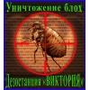 Уничтожение домовых блох в Алматы и области.    Дезостанция «ВИКТОРИЯ»