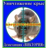 Уничтожение крыс в Алматы и области.    Дезостанция «ВИКТОРИЯ»