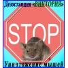 Уничтожение мышей в Алматы и обл.    Дезостанция «ВИКТОРИЯ»