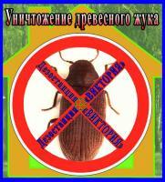 Уничтожение древесного жука короеда,   квартира,   дом и другие помеще