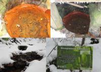 Воды Свалявы Оленёво гидрокарбонат.  натриевые,  углекислые минеральны