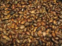 Продам кедровый орех в скорлупе