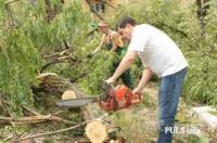 Спил дерева,  покос травы ,  расчистка участков вывоз мусора