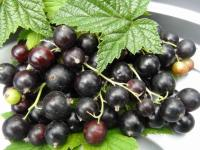 порошок чёрной смородины клетчатка ягодная