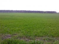 Продаётся 29 га земли в Макаровском районе с.  Новосёлки.