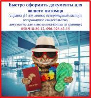 Срочно сопроводительные документы для кошки (справка ф1 и т. д. )