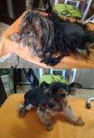 Стрижка,  роллинг,  тримминг собак