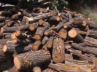 Дроблёная ветка,  дрова твёрдвх пород