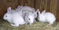 Комбикорма для кроликов в Днепре тм Агрозоосвит